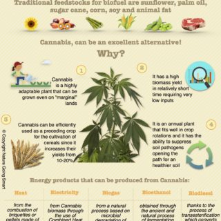 Cannabis / Hemp Biofuel - Nature Going Smart