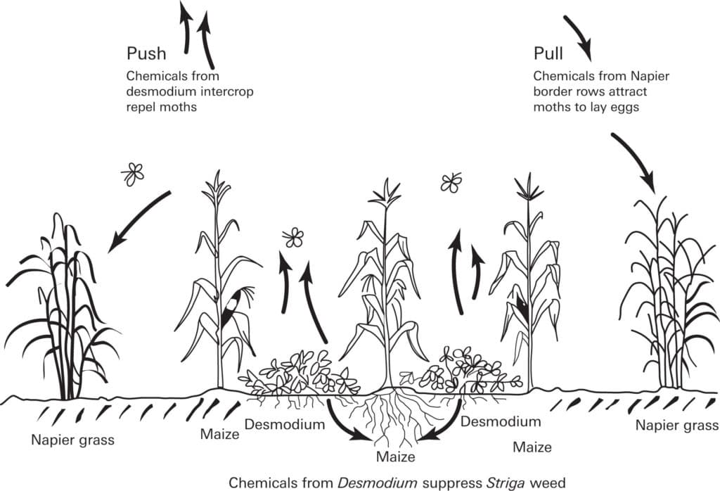 Push Pull Technology An Eco Friendly Pest Management System on Spinal Cord Injury Functions