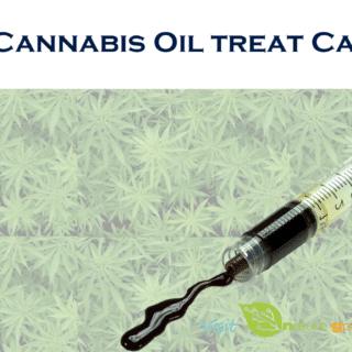 cannabis oil treat cancer