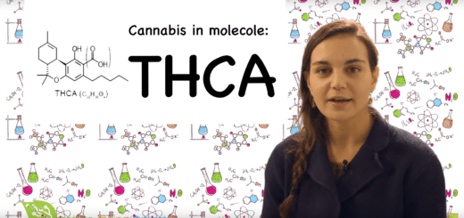 THCA (Acido Tetraidrocannabinolico)