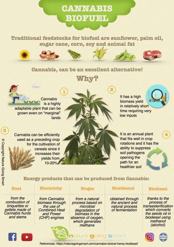 Biofuels Pros And Cons >> Hemp: a revolutionary feedstock for biofuels • Nature Going Smart